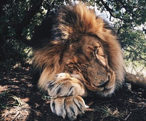 amazing, lion, and pretty image