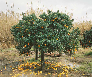 orange and tree image