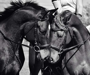 horses, kiss, and black and white image