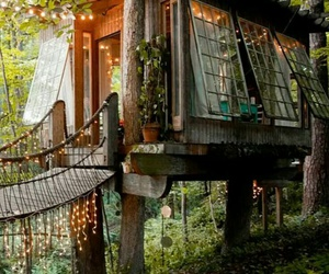 nature, tree house, and wood image