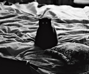 cat, bed, and eyes image