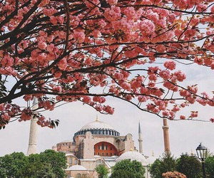 istanbul and tree image