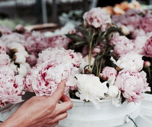 decoration, peonies, and flowers image
