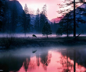 sunrise wood trees pink image