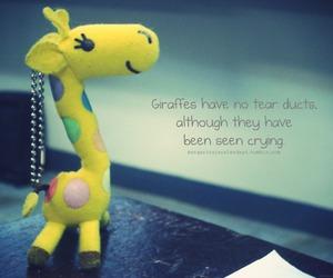 giraffe, yellow, and facts image