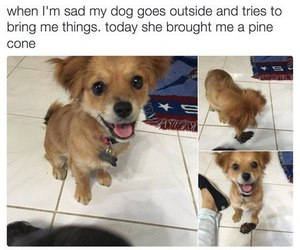 cute, dog, and funny image
