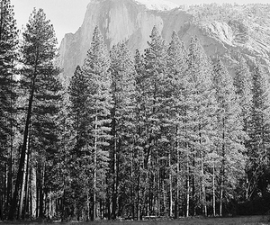 mountains, tree, and beautiful image