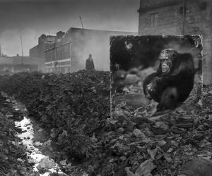 humanity, monkey, and pollution image