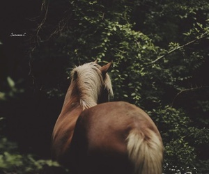 horse, nature, and beautiful image