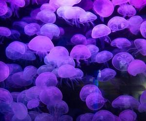 purple, jellyfish, and glow image