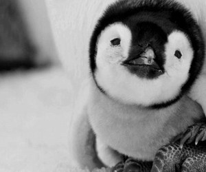 cute, penguin, and animal image
