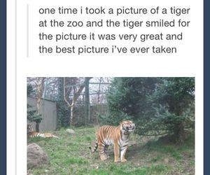 funny, smile, and tiger image