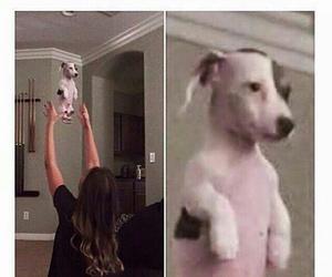 dog, funny, and lmfao image