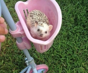 cute, animal, and pink image