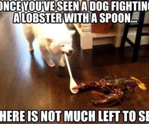 dog, lobster, and funny image