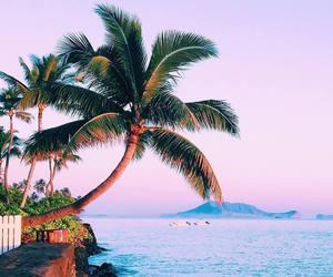 Aloha, tropical, and hawaii image