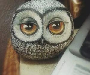 owl and bird image