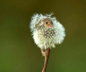 flower, cute, and mouse image