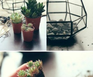 cactus, diy, and plants image