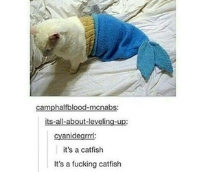 catfish, funny, and tumblr image