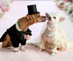 animal, bride, and cool image