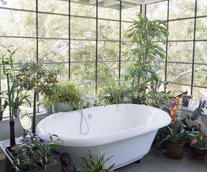 plants, bath, and nature image