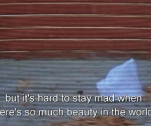 american beauty, film, and quote image