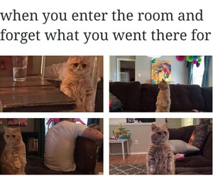 cats, funny, and lol image