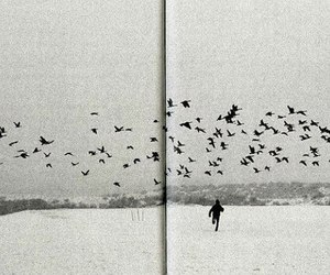 bird, black and white, and book image