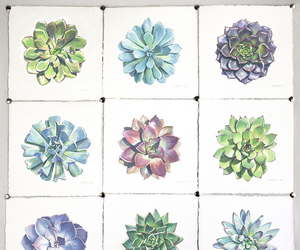 art, original art, and echeveria image