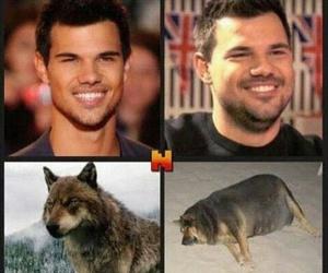 evolution, fat, and jacob image