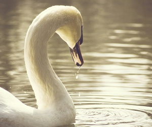beauty, elegance, and water image