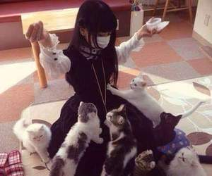 cats, cute, and korean image