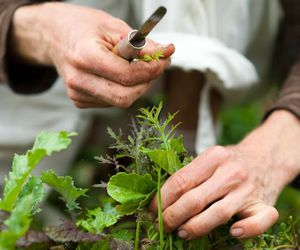 gardening, hands, and plants image