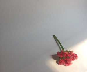 flower, photograph, and pink image