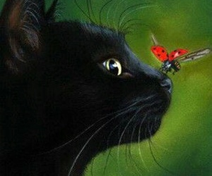 cat, ladybug, and animal image