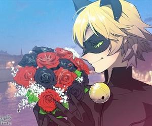 Chat Noir, miraculous ladybug, and cat noir image