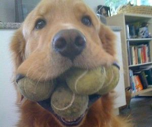 dog, cute, and ball image