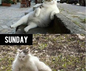 cat, funny, and friday image