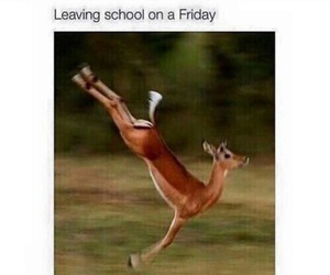 funny, school, and friday image