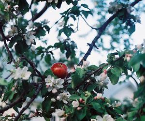 apple and tree image