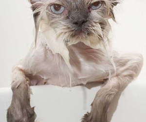 cat, funny, and wet image