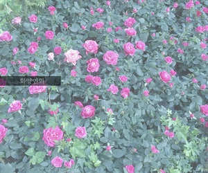 flower, green, and korea image