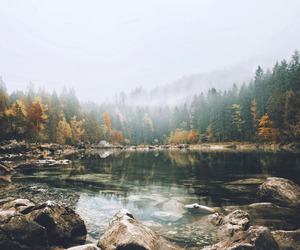 lake, forest, and nature image