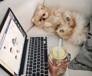 cuddle, dog, and drink image