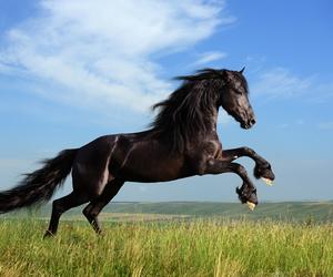 pferde horse image