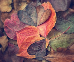 autumn, leaves, and heart image