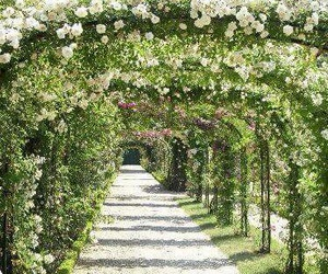 flowers, garden, and lovely image