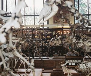 museum, bones, and skeleton image