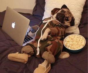 dog, apple, and pug image